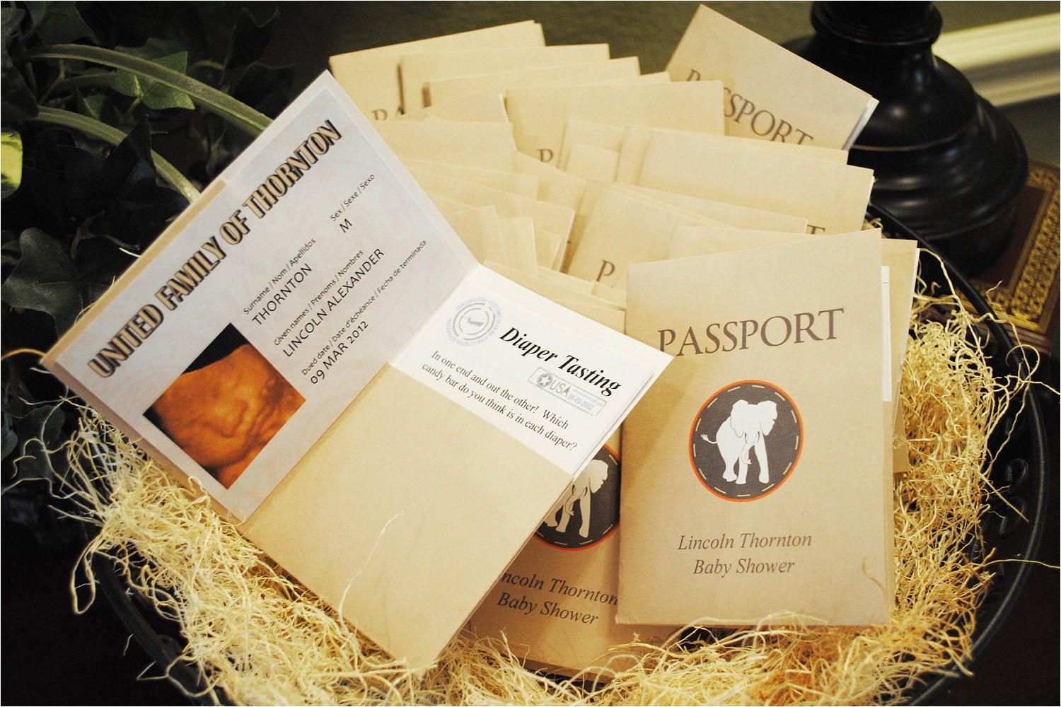 sophisticated safari passport for baby